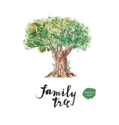 Family tree old olive vector