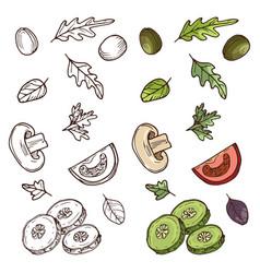 Hand drawn vegan salad ingredients tomato vector