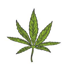 narcotic cannabis leaf color sketch engraving vector image