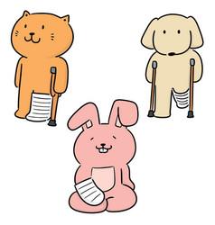 Set animal use orthopedic cast vector