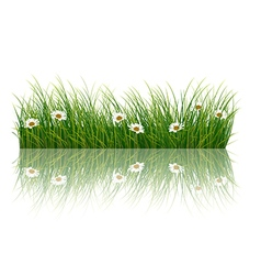Fresh grass background vector image vector image