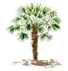 watercolor palm tree vector image