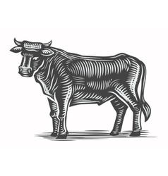 Hand drawn beef vector