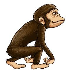 Ape vector image