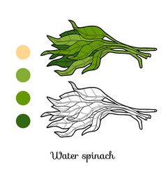 coloring book plant water spinach vector image