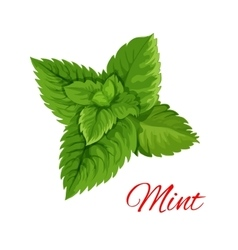 Mint leaves bunch isolated emblem vector