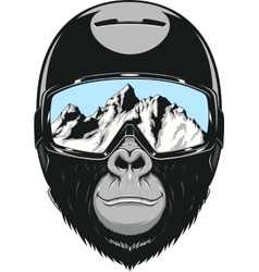 Monkey wearing a helmet vector image