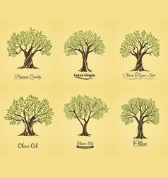 Olive tree silhouettes with leaves and branches vector