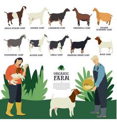 set ten breeds domestic goats flat vector image