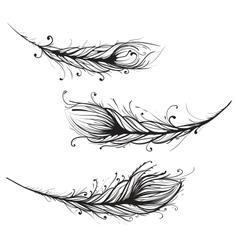 Intricate decorative feathers vector