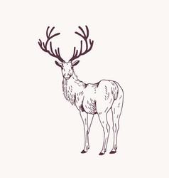 Elegant outline drawing male deer or stag vector