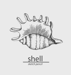 Sea shell a marine resident sketch vector