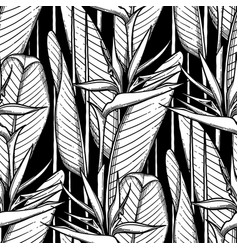 graphic strelitzia pattern vector image