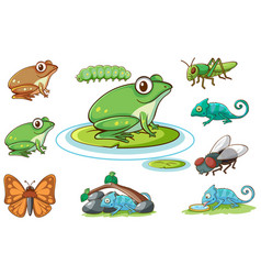 isolated picture frogs and other insects vector image