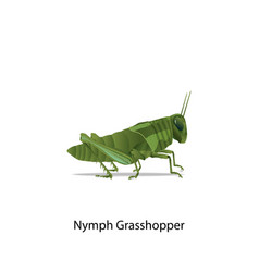 Nymph grasshopper vector