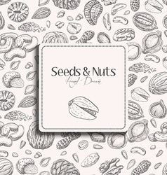 Seamless pattern with seeds and nuts on a white vector