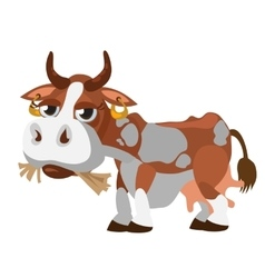 Cute spotted cow munching hay cartoon character vector image