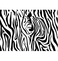 seamless zebra skin pattern wallpaper with black vector image