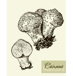 Set of linear drawing mushrooms vintage vector image