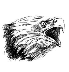 Hand sketch head bald eagles vector image vector image