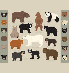 all world bear species in one set bears collection vector image