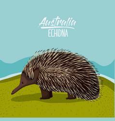 Australia echidna poster in outdoor scene on vector