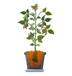 Beans on plant icon cartoon style vector