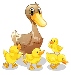 Brown duck and her four yellow ducklings vector