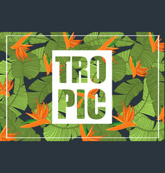 tropic bright tropical design with exotic flowers vector image
