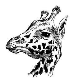 Hand sketch head giraffe vector image vector image