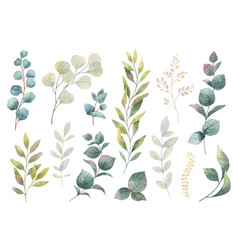 hand drawn watercolor set of herbs vector image vector image