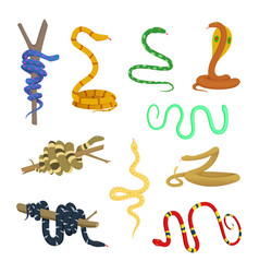 Cartoon pictures different snakes and reptiles vector