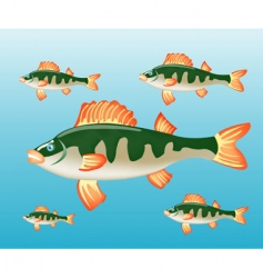 fish perch in water vector image