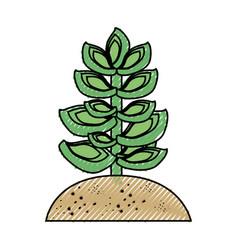 Succulent in the soil vector