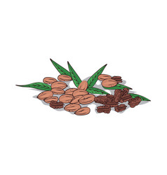 Isolated clipart pecan vector