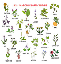 Best herbs for menopause symptom treatment vector