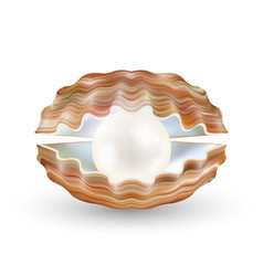 bright pearl in a opened sea shell vector image