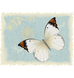 Butterfly on a blue background vector image