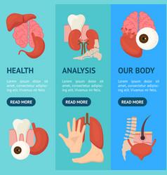 cartoon human internal organs banner vecrtical set vector image