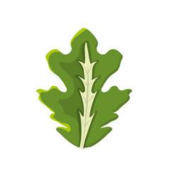 Delicious leaf lettuce organ food vector