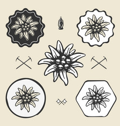 edelweiss flower alpinism vintage icon flat web vector image