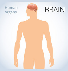 location of the brain in the body the human vector image
