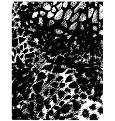 animal skin pattern vector image vector image