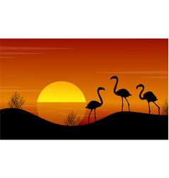at sunset flamingo on lake landscape vector image vector image