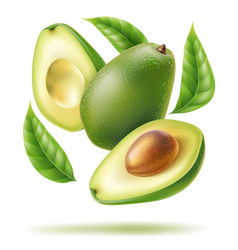 avocado leaf sliced half in motion vector image