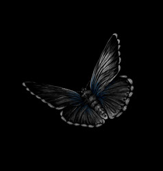 butterfly on a black background hand drawn vector image