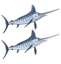 colored a marlin fish vector image