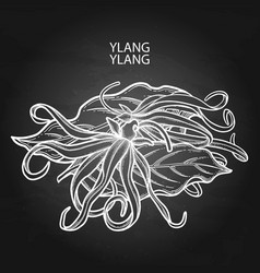 Graphic ylang ylang design vector