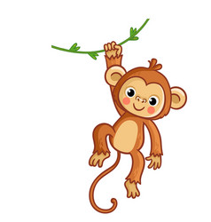 Monkey hanging on liana cute vector