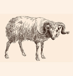 Muzzle a mountain ram vector